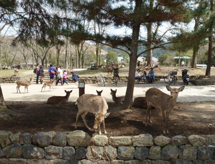 day-3-1-bambi-in-nara-park