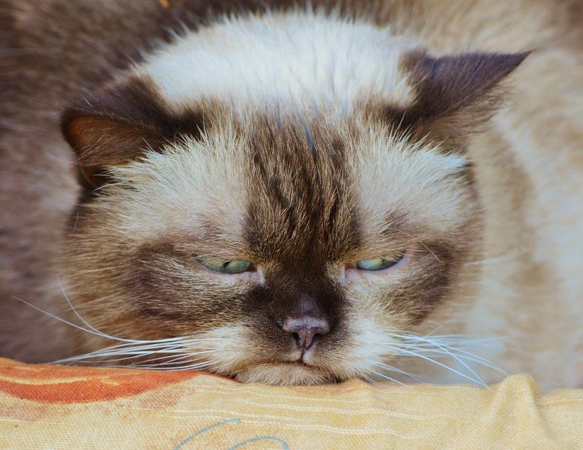 cat-1378203_1920
