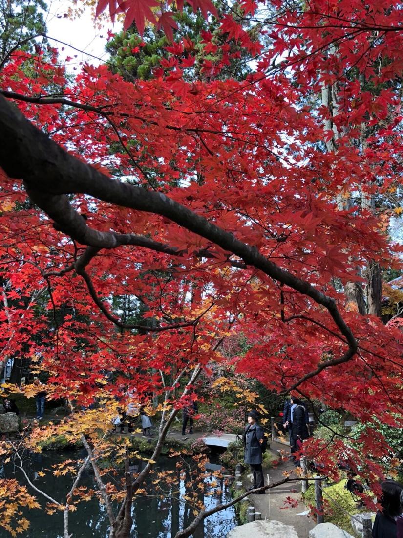 Another garden in Nanzenji